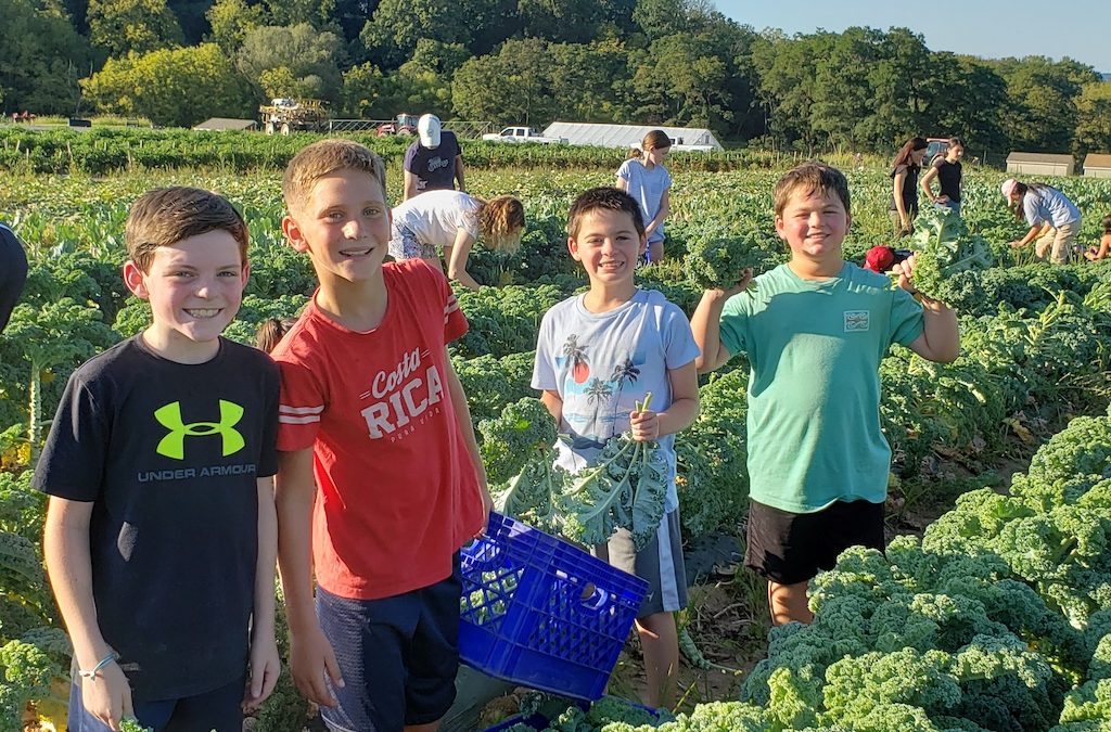 Willow Volunteers Harvest 700 Pounds of Kale for Food Bank