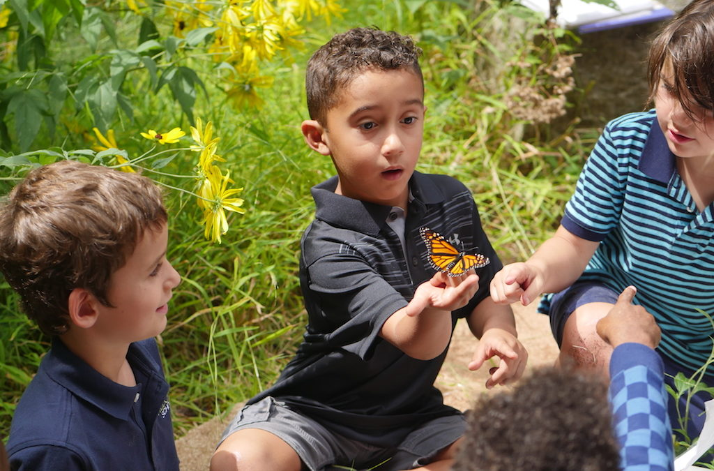 Join Ms. M's Summer of Bugs Nature Challenge!