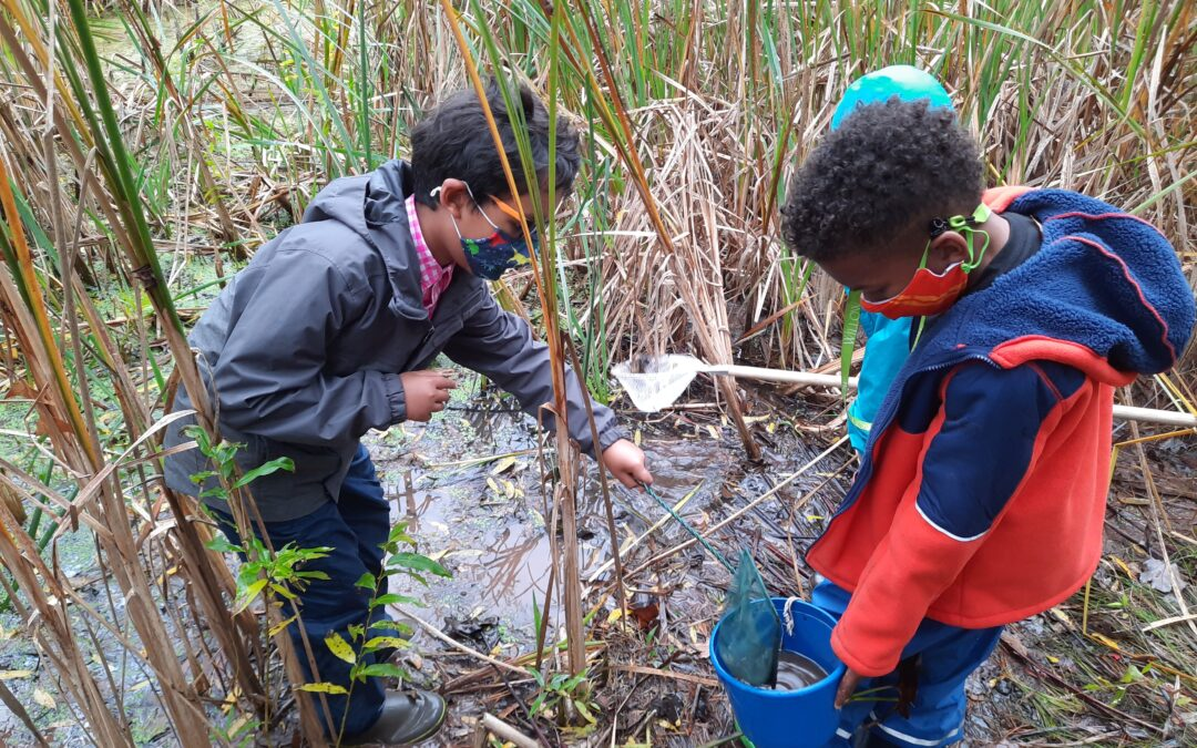 Sign Up for Our Webinar on the Benefits of Outdoor Learning